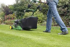 What Diseases Can Affect Your Grass